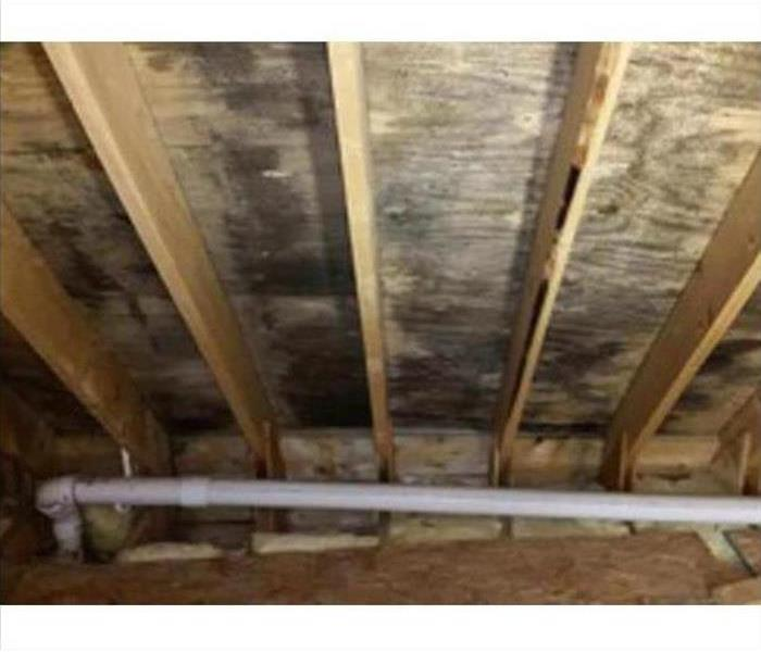 Mold Damage – Fort Worth Attic Before