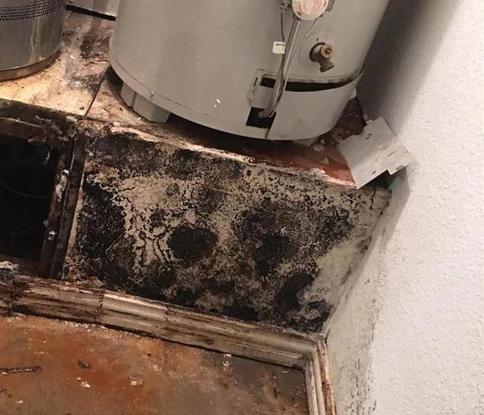 Black Mold Growth in Fort Worth home