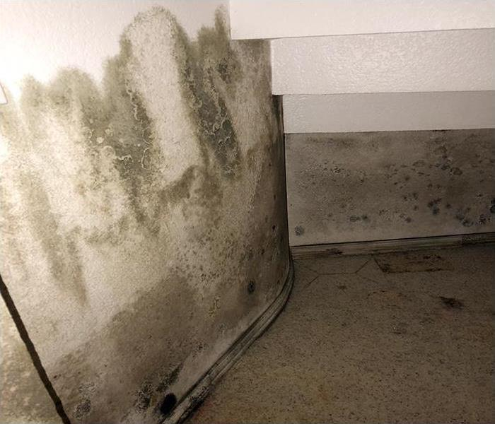 Mold Damage Remediation In Ft. Worth