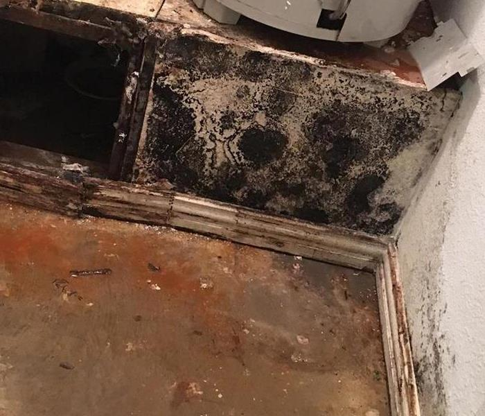 Mold Remediation Mold in your Fort Worth Home