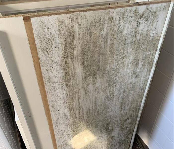 Mold located in vanity